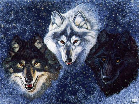 3d Wallpapers Wolf by Hd Wallpapers 3d Wolf Photos
