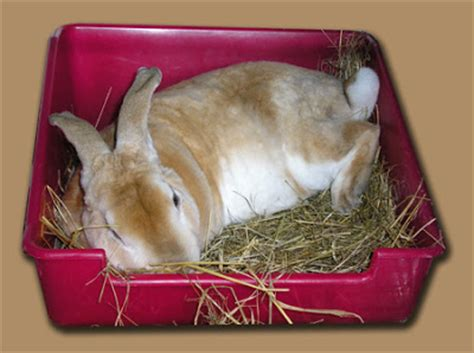rabbit bedding hd animals rabbit bedding