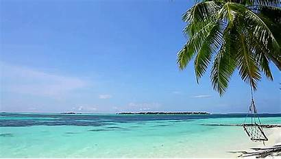 Beach Goa Tree Palm Maldives Swing Gifs