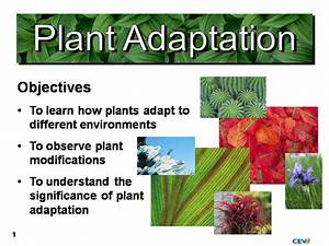 Plant Adaptations Related Keywords - Plant Adaptations ...