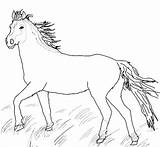 Coloring Horse Pages Miniature Printable Getcolorings Getdrawings sketch template