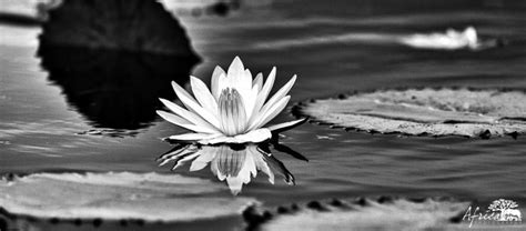 nature photography  black  whiteafrica photography