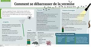 Se Débarrasser Des Araignées : infographie comment se d barrasser de la vermine m tro ~ Louise-bijoux.com Idées de Décoration