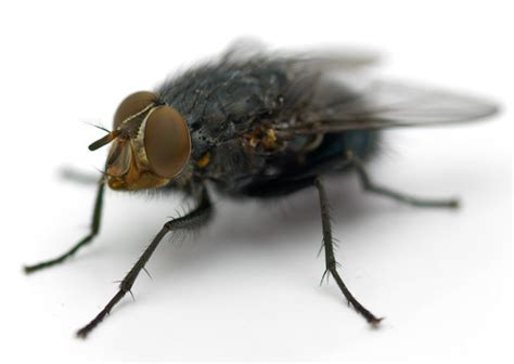 School Pest News Volume 11, Issue 3, June 2012
