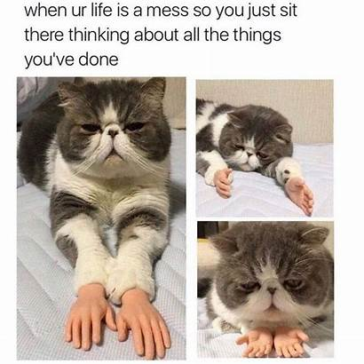 Memes Clean Afternoon Meme Funny Mess Cat