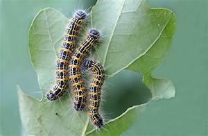 Jj U0026 39 S Photographic Nature Blog  Caterpillars Preparing For Winter