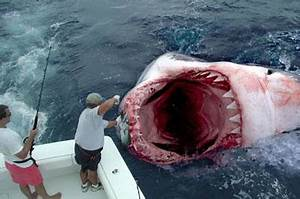 Megalodon Is Alive! Scientific Fishing Trip Reveals ...