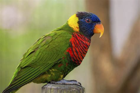 most colorful birds top 14 most colorful birds in the world an epitome of