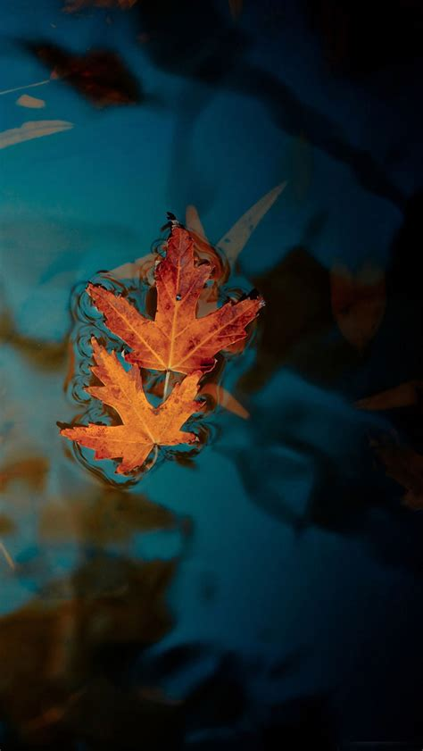 Beautiful Fall Leaves Iphone Wallpaper by Fallen Leaves The Iphone Wallpapers