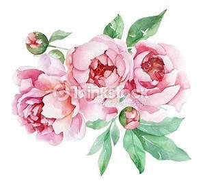 pivoines avec feuilles aquarelle rose illustration With chambre bébé design avec aquarelle fleurs pour mariage