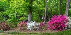 Gartengestaltung Unter Bäumen : unter b umen pflanzen so gelingt es ~ Yasmunasinghe.com Haus und Dekorationen