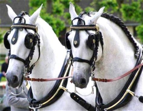 carrozze con cavalli carrozze con cavalli a sorrento theweddingkey