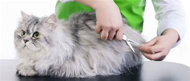 cat groomers proper care of your cat in knoxville tennessee cat care