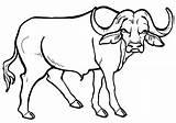 Buffalo Coloring Animal Coloringway sketch template