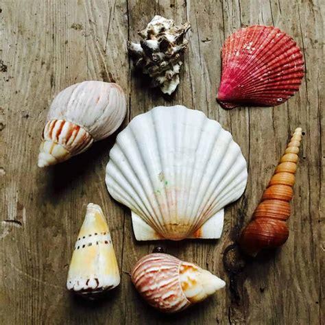 drill  hole   seashell crafty  gnome