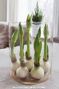 Blumen Im November : fr hling brillen and tulpe on pinterest ~ Lizthompson.info Haus und Dekorationen