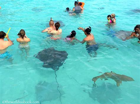 Where Can I Snorkel With Regular Sharks Ninja Shark