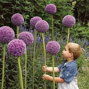Do Onion Plants Have Flowers