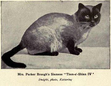 types  siamese cats