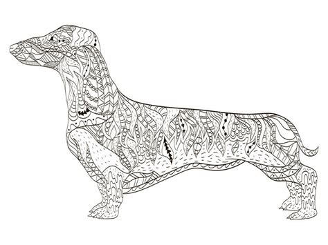 dachshund coloring book  adults vector stock vector illustration  bloodhound body