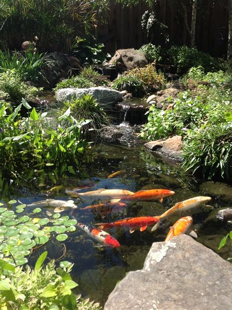 coy ponds pictures 17 best images about koi fish pond dreams on pinterest gardens backyard ponds and zen design