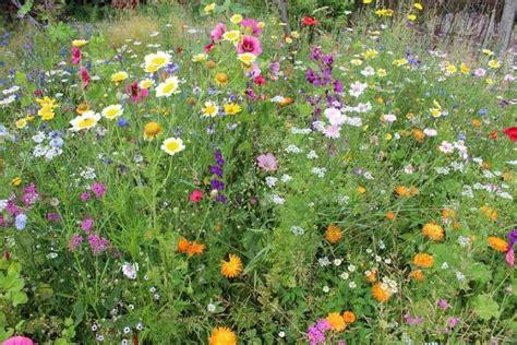 Blumenwiese, Naturnaher Garten, Foto