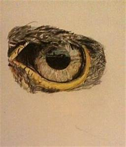 how to draw eagles | Eagle's eye in pencil by KoKosasih ...
