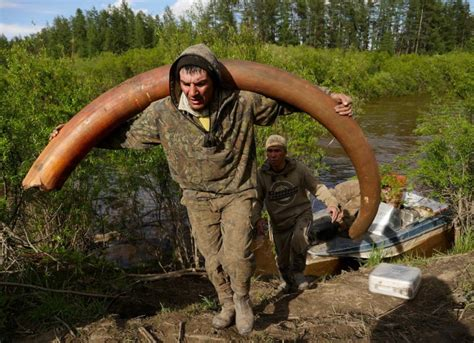 photographing  mammoth ivory tusk hunt  siberia
