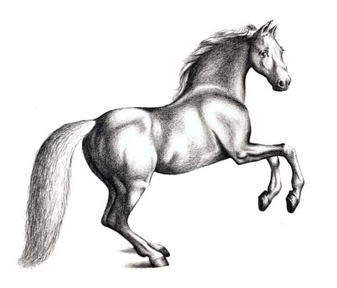 Steps to Draw Horse Drawings