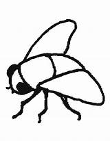 Fly Coloring Flies Pages Printable Getcoloringpages sketch template