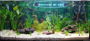 Aquarium Gestaltung Bilder : aquarium 1 200l flowgrow aquascape aquarien datenbank ~ Lizthompson.info Haus und Dekorationen