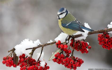 Free Photo Winter Bird Anima Bird Cold Free