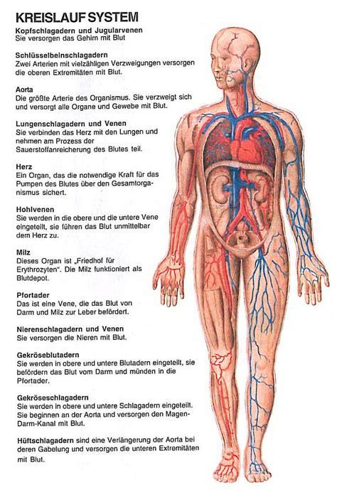 Innereien menschlicher körper