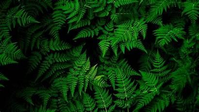 Leaves Desktop Plant Nature Wallpapers Tropical Px