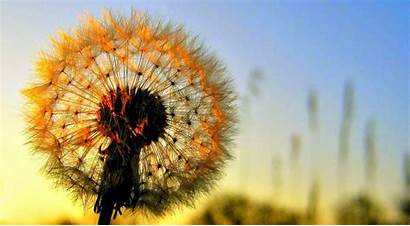 Bunga Gambar Cantik Indah Cewek Bagus Yang
