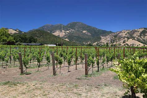 Valley Floor Vineyard  The Napa Wine Project