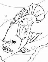 Coloring Pages Aquarium Fish Oscar Catfish Drawing Printable Gambar Ikan Mewarnai Freshwater Sheet Akuarium Sheets Colouring Di Drawings Realistic Tropical sketch template