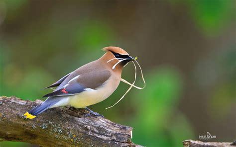 Desktop Fun Small Birds Theme For Windows • Pureinfotech
