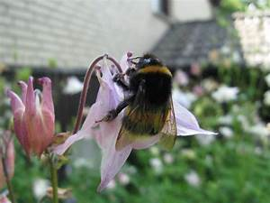 Welche Blumen Für Bienen : blumen gegen das bienensterben netzfrauen netzfrauen ~ Eleganceandgraceweddings.com Haus und Dekorationen