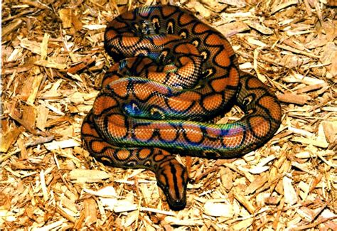 5 Most Beautiful Snakes   Fun Animals Wiki, Videos ...