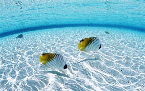 Underwater Desktop Backgrounds (71
