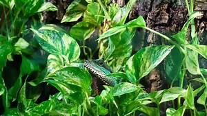 Pflanzen Für Terrarium : pflanzen f r 39 s terrarium vorsicht giftig ~ Orissabook.com Haus und Dekorationen
