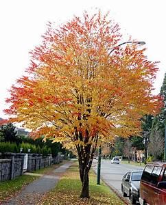 Petit Arbre Persistant : 10 plantes originales pour rendre jaloux vos voisins ~ Melissatoandfro.com Idées de Décoration