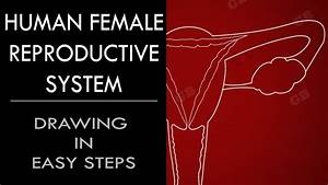 Male Reproductive System Diagram Se 10 Answers