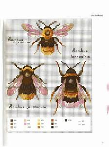 Gallery Ru    Photo   13 - Marabout Insects