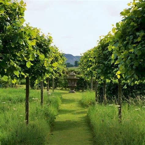tree lined garden pathway garden inspiration