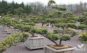 Pflanzen Japanischer Garten : verkaufsraum naturform garten und landschaftsbau japanischer garten und koiteichbau ~ Sanjose-hotels-ca.com Haus und Dekorationen