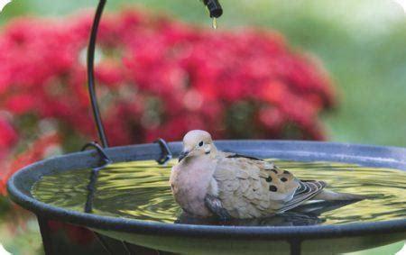 Backyard Bird Shop Locations by Bird Bathing Birds Unlimited Birds Unlimited