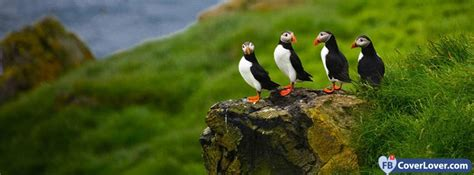 group  cut puffins animals facebook cover maker