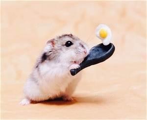 So cute hamster making an egg | Animals make me ...